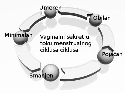 vaginalni-sekret-u-toku-ciklusa