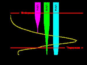 500px-Ozone_altitude_UV_graph